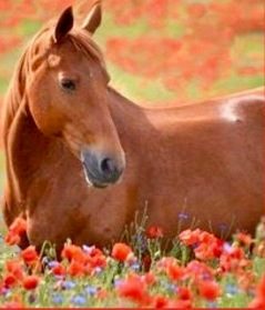 HORSE:COPPER:FLOWERS